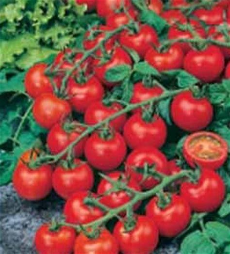 Pembuang Biji Cherry Dan Anggur Plastik benih tomato cherry