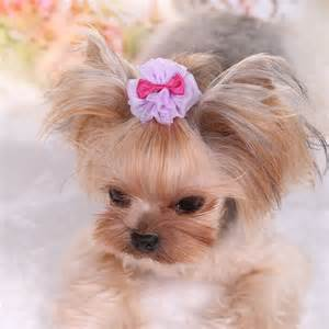 hair accessories for yorkie poos 1 2 5 pcs pretty tulle pet dog yorkie hair bows