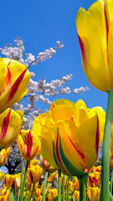 iphone wallpaper flowers iphone wallpapers 25 flowers iphone wallpapers