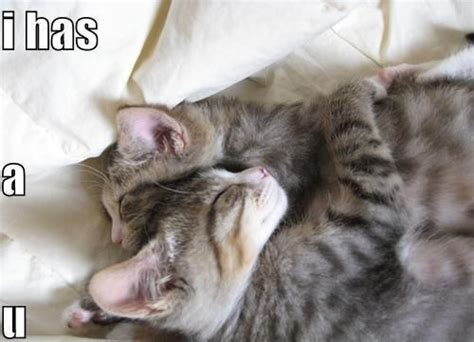 i love cats cute cat kitten pictures cute cat 13 best images about cute kittens on pinterest cats