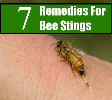 bee sting 7 effective home remedies for bee stings search home remedy