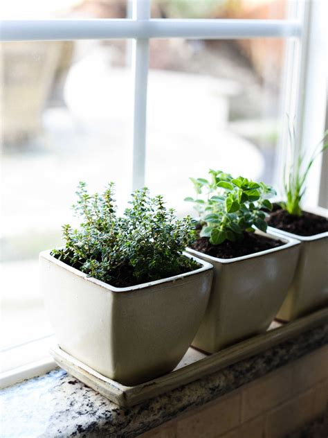 Countertop Herb Grower by 100 Countertop Herb Garden Indoor Edible Garden