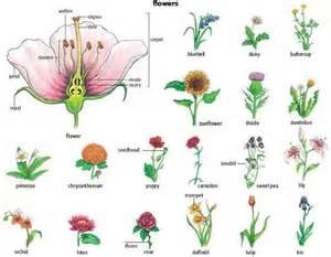 Garden Flower Names Flower Names Weneedfun