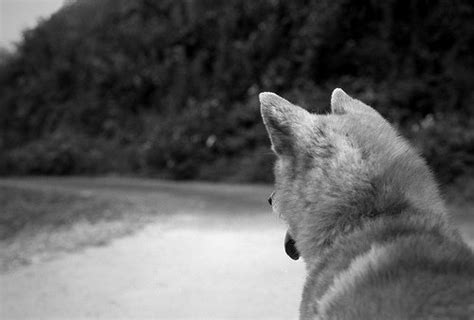 do dogs see in black and white can dogs see colour or black and white what is psychology