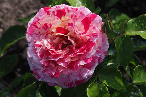 Die Schönsten Zimmerpflanzen 4396 by Die Sch 246 Nsten Die Sch Nsten Blumen Der Welt Bild