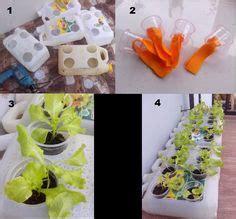 menanam lemon hidroponik panduan praktis cara menanam tanaman hidroponik plants