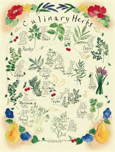 Botanical posters by margo high quality herb vegetable