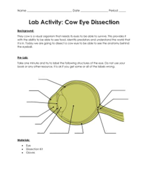 Cow Eye Dissection Worksheet by Eye Dissection Worksheet Defendusinbattleblog