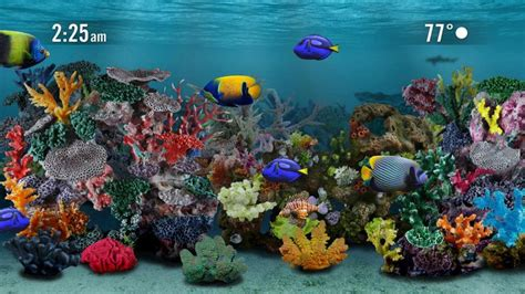 best fish screensaver 25 best ideas about aquarium screensaver on