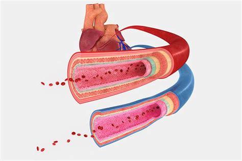 alimenti per ipertensione ipertensione ecco gli alimenti da evitare dieta