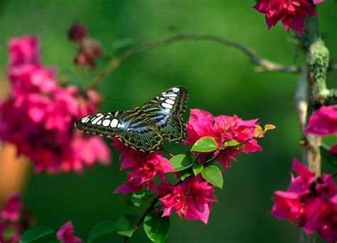 wallpaper flower butterfly flowers for flower lovers flowers butterfly natural