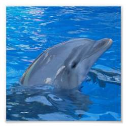 Unique Dolphin Gifts Bottlenose Dolphin Print Zazzle