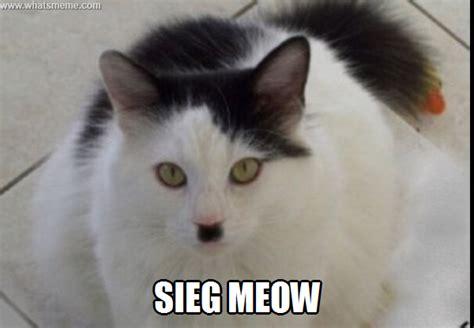 Meow Meme - meow what s meme