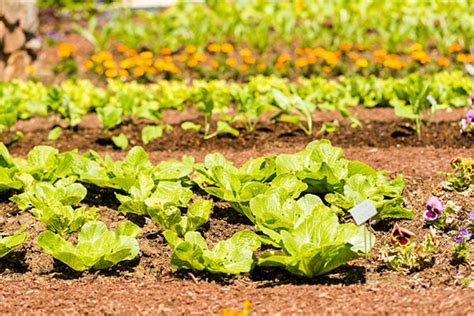 keeping pests out of vegetable garden how to protect your new vegetable garden from pests disease