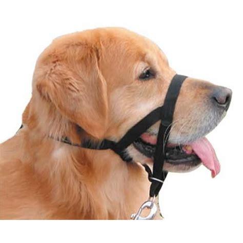 halti harness halti collar in black pet365