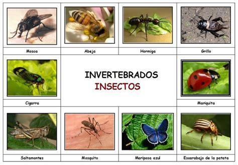 imagenes animales invertebrados conocimiento del medio cuarto animales invertebrados