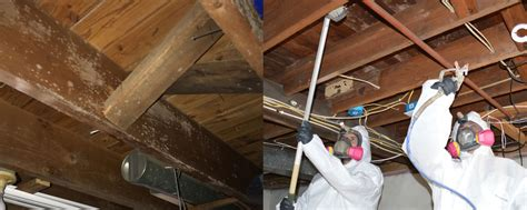 basement mildew removal basement mold mildew removal image mag
