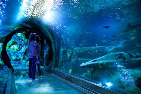 sea life aquarium  concord mills mall