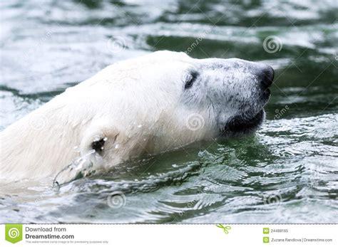 polar royalty free stock photo image 24488165