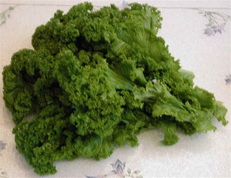mustard greens ingredients descriptions and photos an