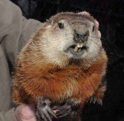 groundhog day events upcoming groundhog s day events on li longisland