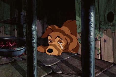 sad pound dog    cry   poll results lady  tramp fanpop