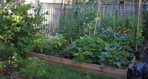 b f vegetables winslow 65 best gardening images on backyard ideas