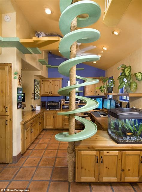 Small Home Gym Decorating Ideas by Now That S A Purr Fect Paradise Man With 18 Cats Spends