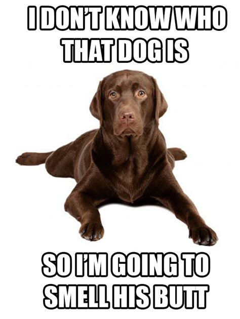 why do dogs sniff why do your dogs smell other dogs labradorretrieverguide