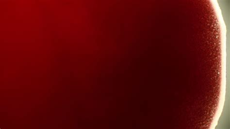 pattern formation in drying drops of blood blood drop video stock footage