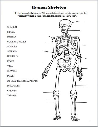 Skeletal System Worksheets For College by Best 25 Skeletal System Activities Ideas On