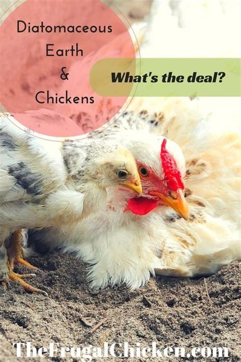 diatomaceous earth chickens what s the deal it is