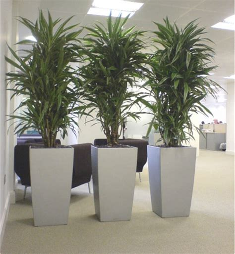 awesome home and then large plants tall houseplants to 25 inspirations of tall outdoor potted plants