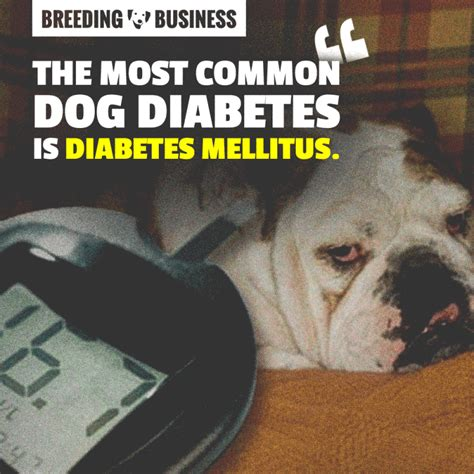 can dogs get diabetes canine diabetes mellitus