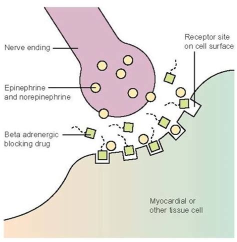 Blockers Australia Weight Effects Of Beta Blockade Dr Sharma S Obesity Notes