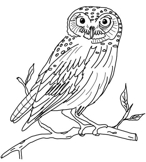 printable owl drawings 41 best images about owls draw on pinterest coloring