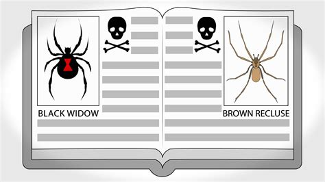 how to kill spiders in house how to kill spiders 11 steps with pictures wikihow