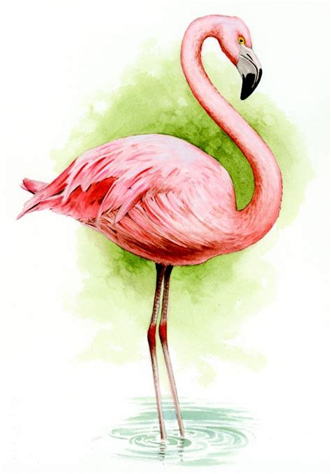 crown wallpaper flamingo 1918 best images about flamingos on pinterest flamingo