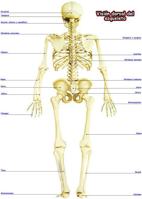 cuerpo humano cuerpo humano femenino related keywords suggestions cuerpo humano femenino long tail keywords