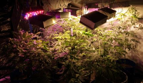 Outdoor Grow Lights For Plants 10 Diy Led Grow Lights For Growing Plants Indoors Home
