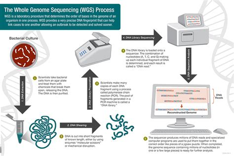 whole genome sequencing illumina the pfge process pulsenet methods pulsenet cdc