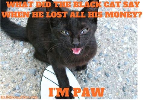 Halloween Cat Meme - halloween joke black cat meme 2 what did the black cat