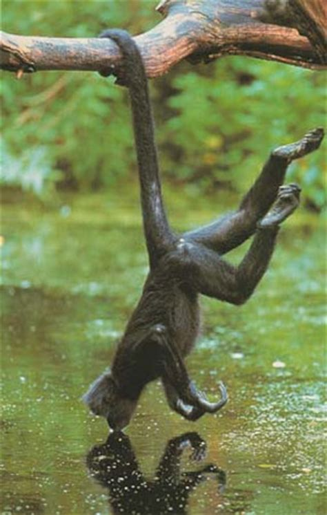 animals that swing from trees structure and movement