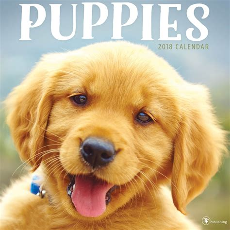 puppies to buy buy puppies 2018 wall calendar by tf publishing best price on tf publishing puppies