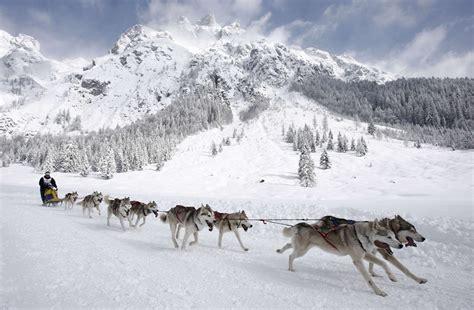 alaskan sled dogs alaskan adventures
