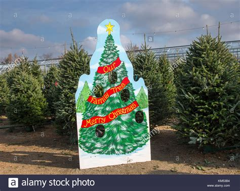 christmas trees for sale south jersey tree new jersey photo albums fabulous homes interior design ideas