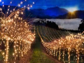 lights in ca vinography images vineyard lights vinography a wine