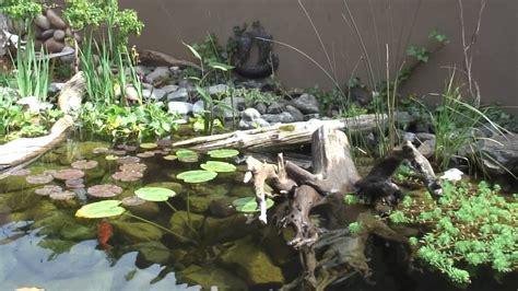 turtle pond youtube