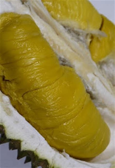 Bibit Durian Musang King Trubus bibit durian musang king bibit durian musang king asli