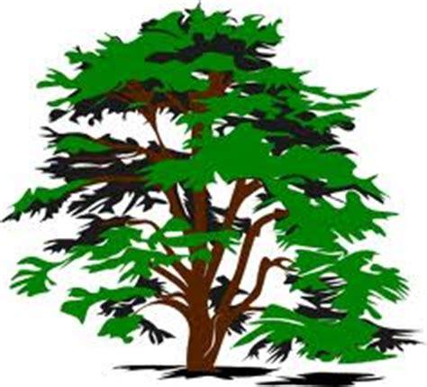 Central MA Tree Removal   Sturbridge, Southbridge